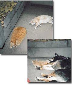 animals can enjoy radiant heated floors too