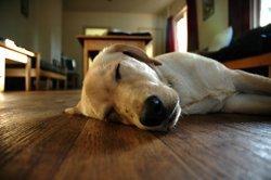 Animals Enjoy Electric Floor Heating Too