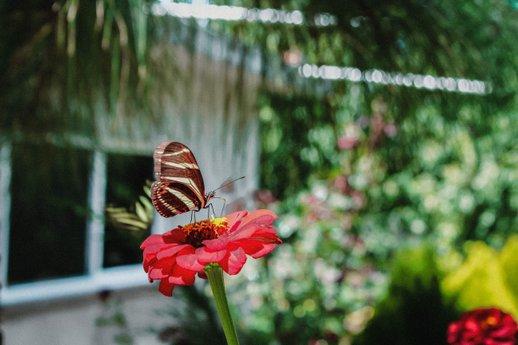 Pollinator garder