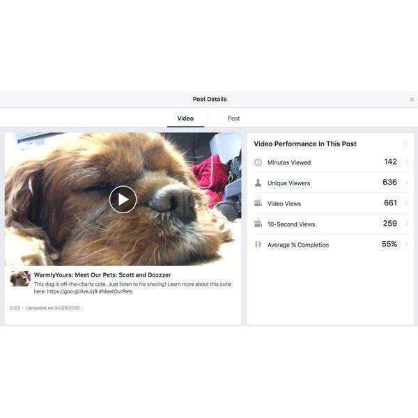 Social Media Trends Dog
